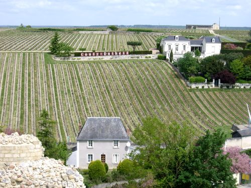 Vineyard_Tower_View