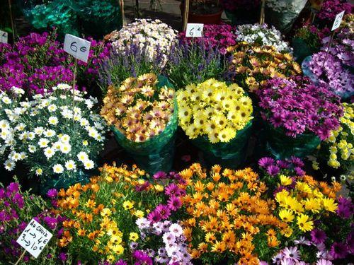 Fleurs_Nice_marche