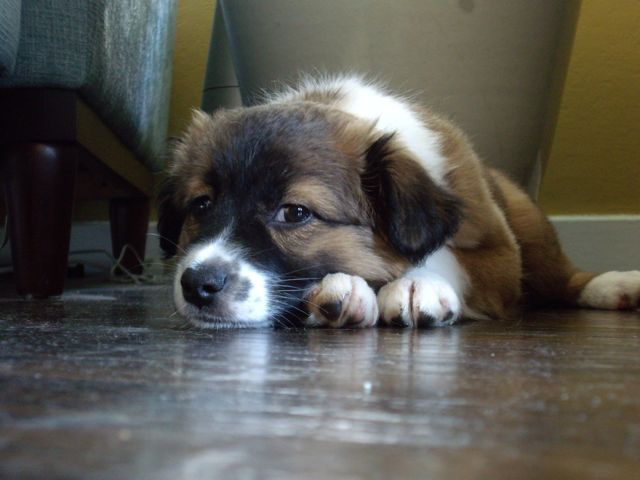 The fur ball in repose